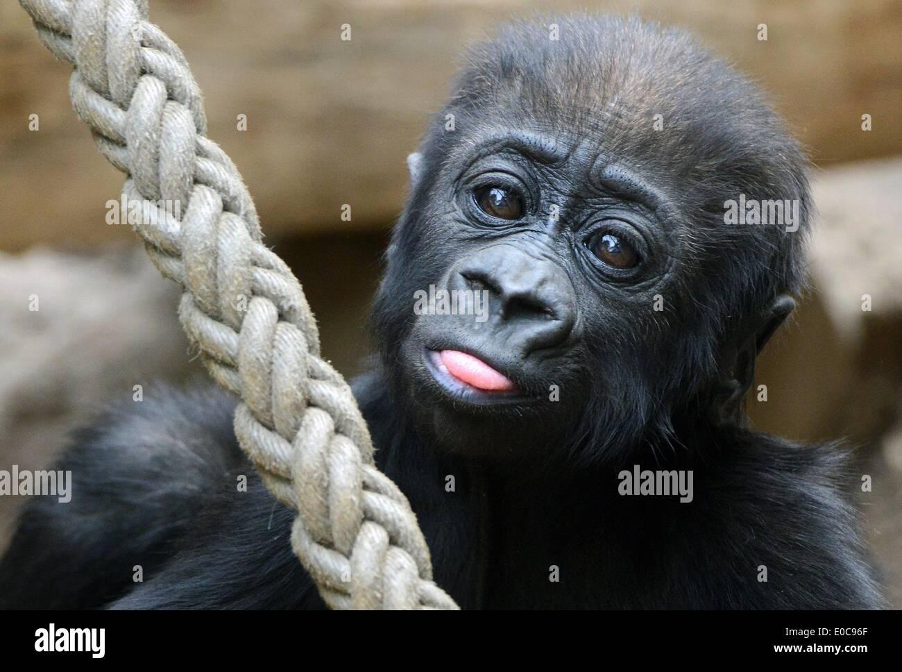 fuck-gorilla-girl-shaved-sex-rape-drunk