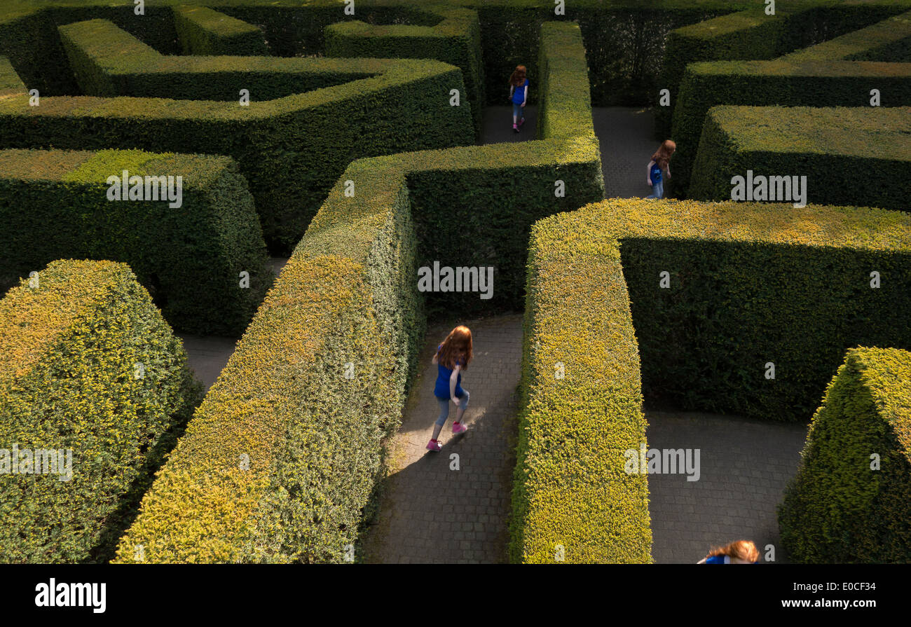 Young girl 11-12 years tween lost in a labyrinth hedge maze by herself playing running looking for the way out Stock Photo