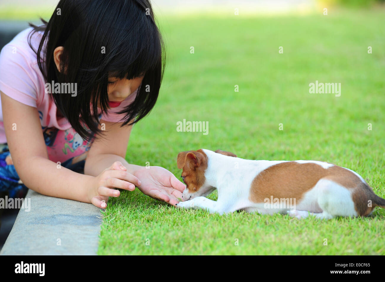 girl giving a dog snack - Stock Image