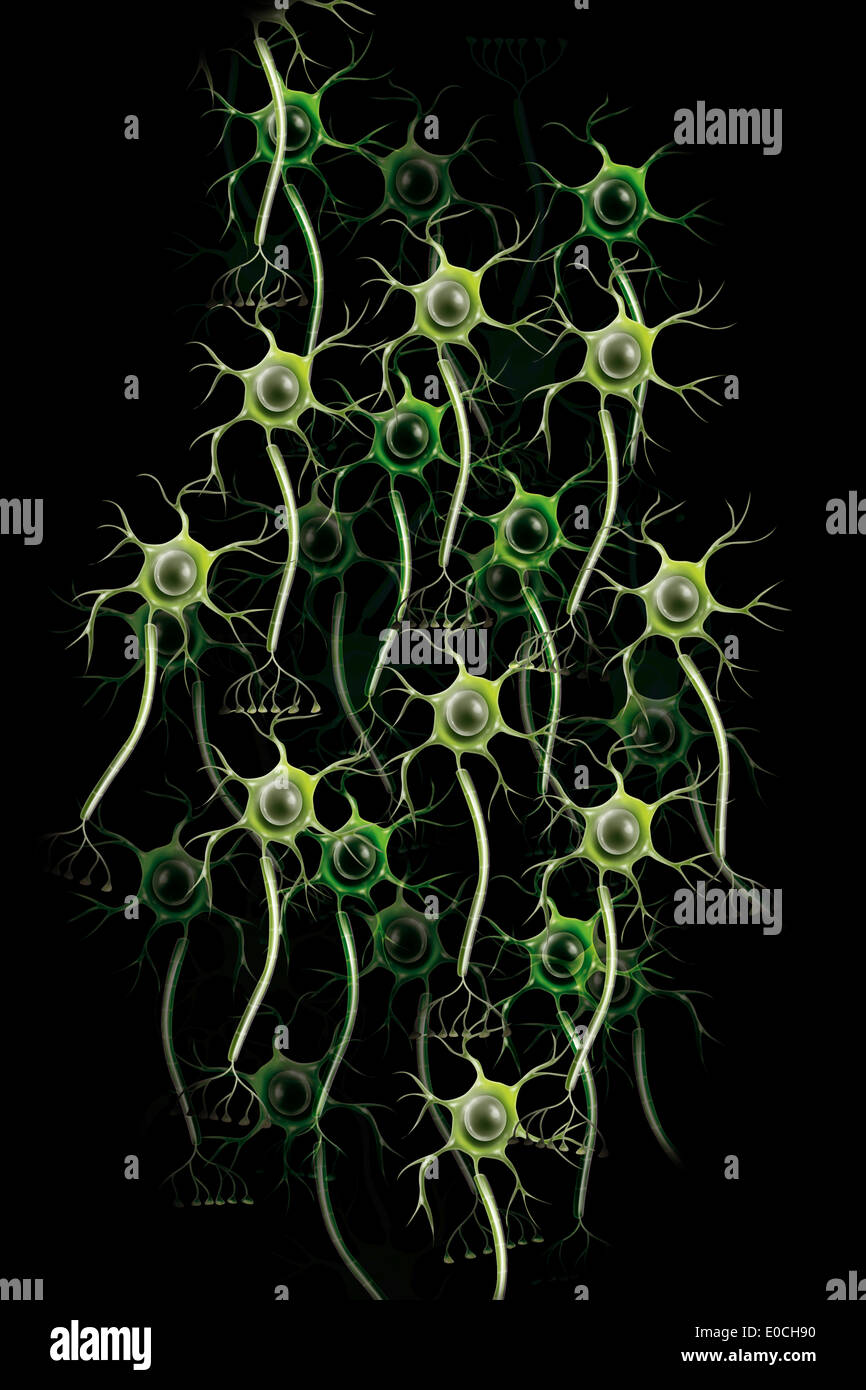 Neuron, drawing - Stock Image