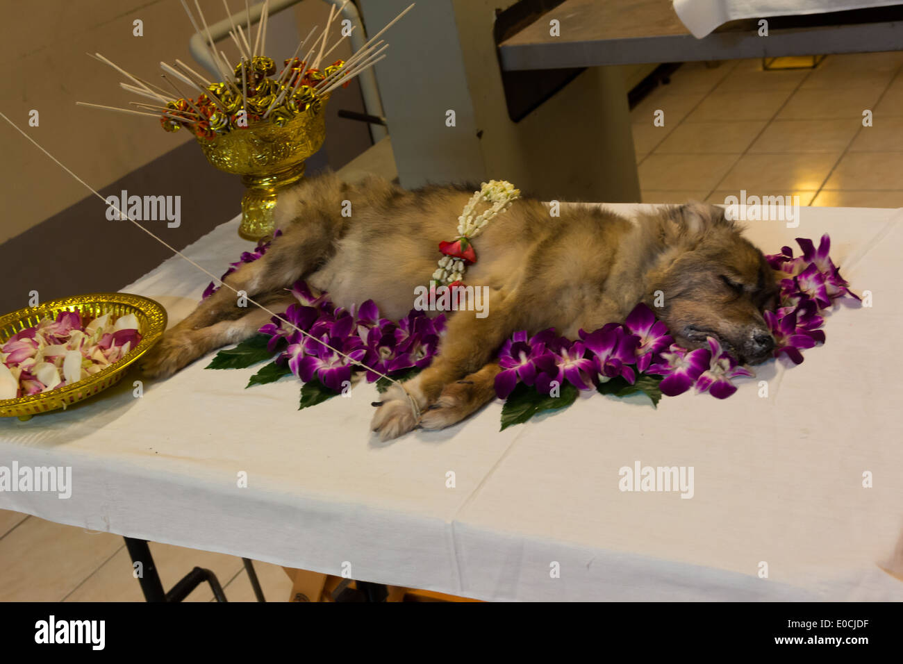 Dog funeral stock photos dog funeral stock images alamy dog funeral ceremonyrest in peace stock image izmirmasajfo