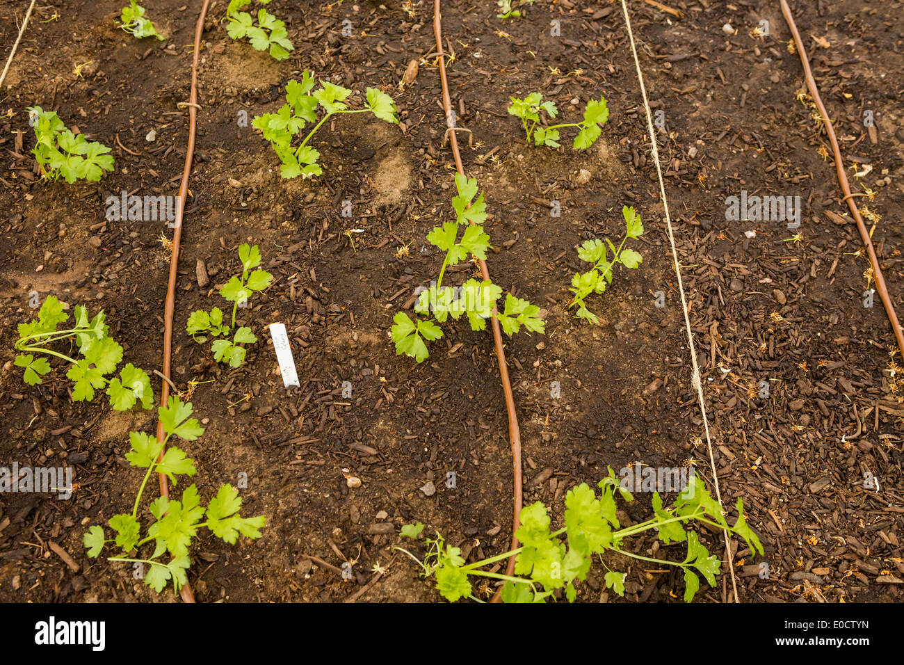 Urban vegetable garden is ready for planting in Spring Stock Photo ...