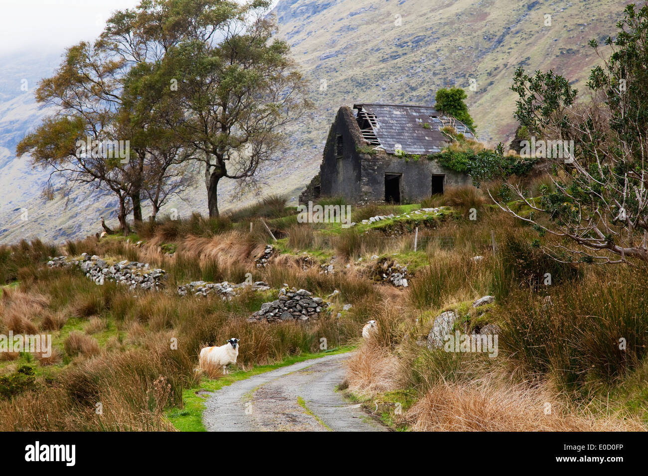 An old, abandoned house at the end of a lane; Black Valley, County Kerry, Ireland - Stock Image