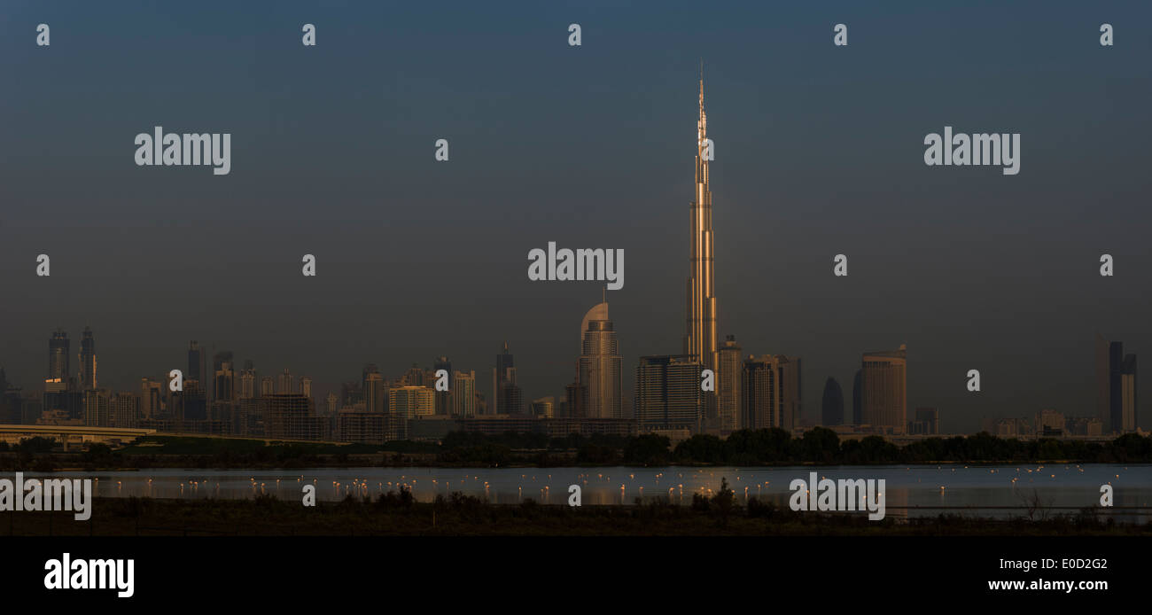 Greater Flamingos feeding and the sun catching the Burj Khalifa, Dubai, United Arab Emirates (Phoenicopterus roseus) - Stock Image
