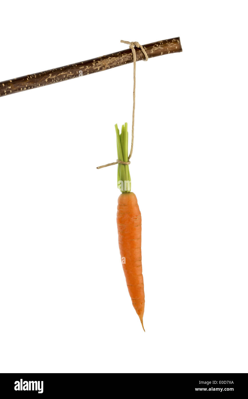 Carrot on a floor. Fresh fruit and vegetables is always healthy. Symbolic photo for motivation., Moehre auf einem Stock Photo