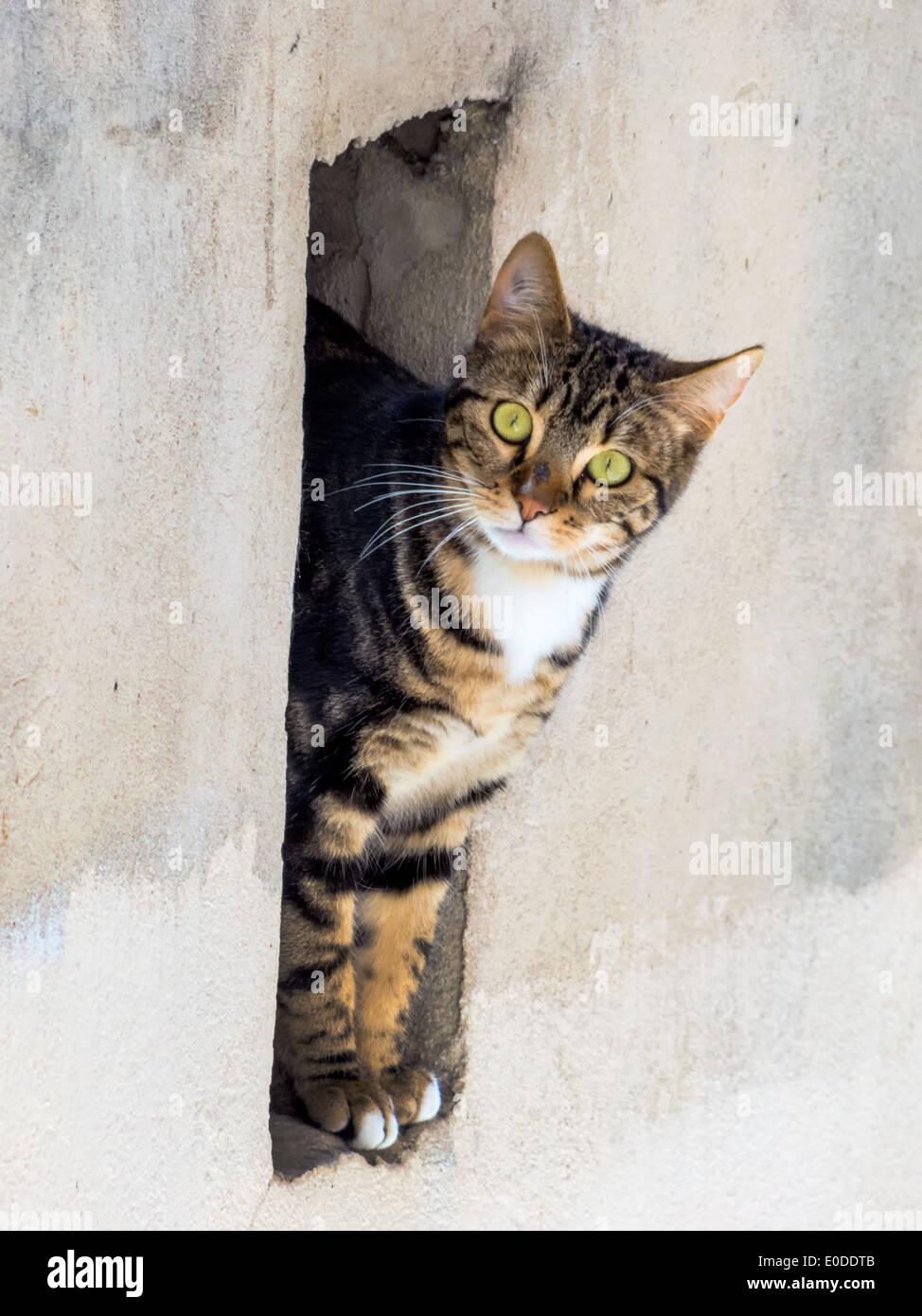 A small cat sees curiously from the niche of a wall, Eine kleine Katze sieht neugierig aus der Nische einer Mauer Stock Photo