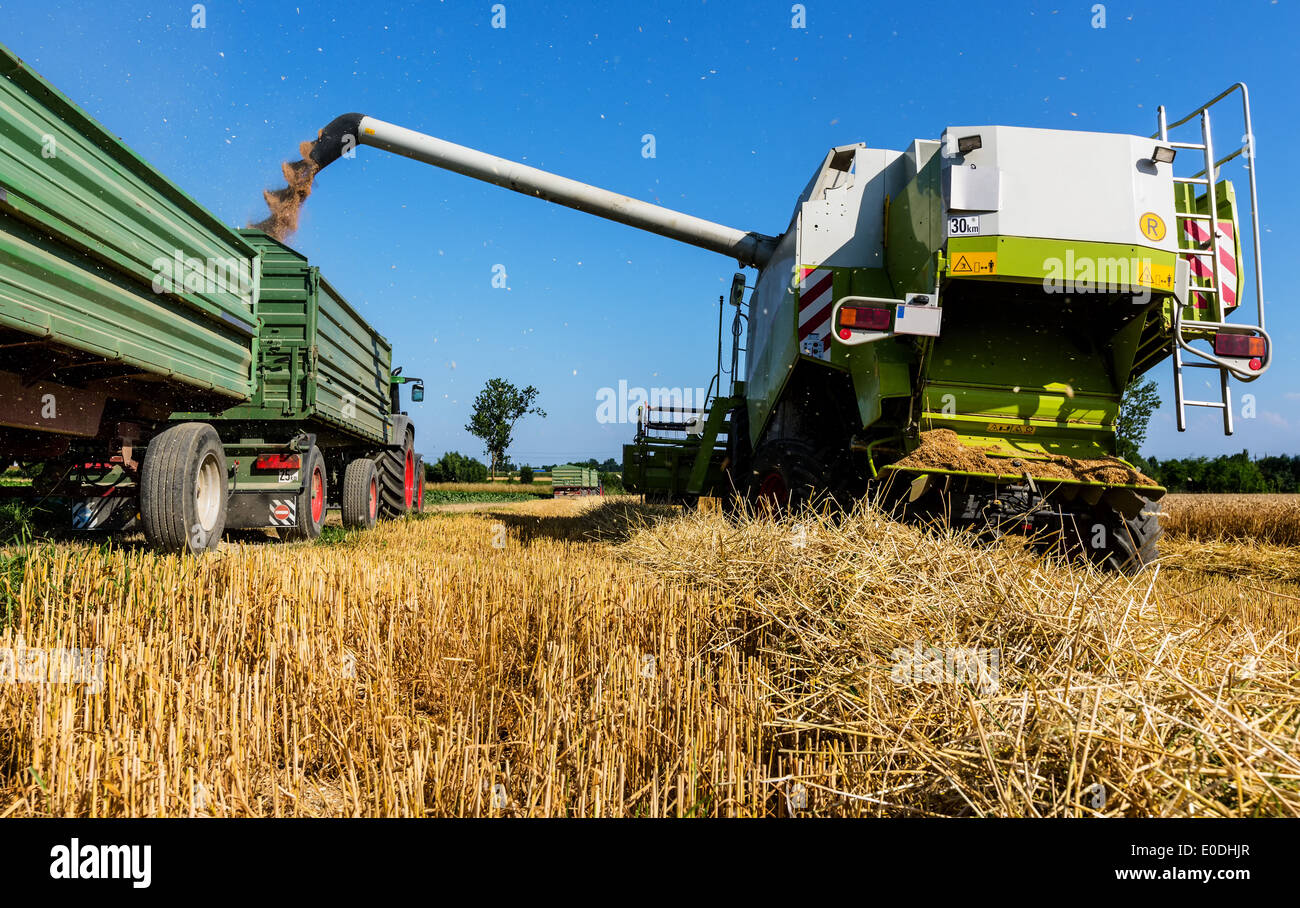A grain-field with wheat with the harvest. A combine harvester at the work., Ein Getreidefeld mit Weizen bei der Stock Photo