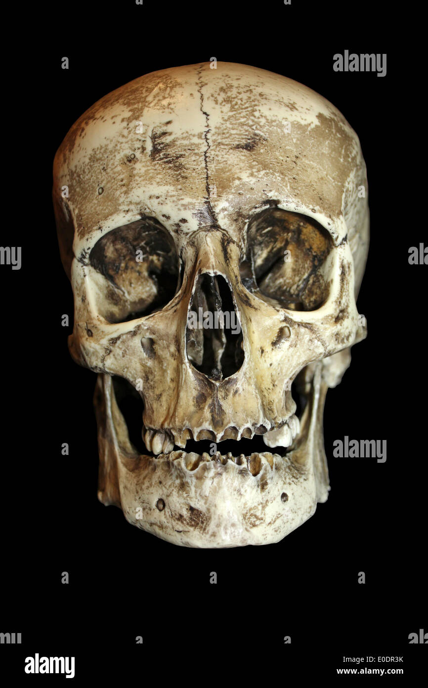 Human Skull Stock Photos Human Skull Stock Images Alamy