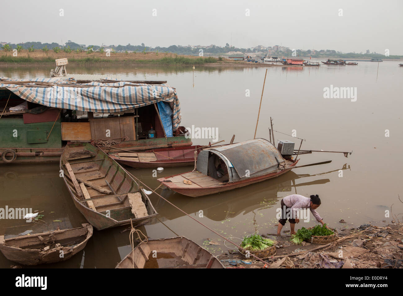 Farmers wash vegetables along the Red River in Hanoi, Vietnam. - Stock Image