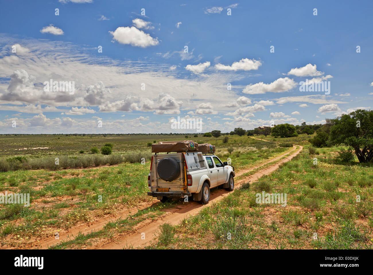 4x4 on the way to Polentswa Lodge in landscape of Kgalagadi Transfrontier Park, Kalahari, South Africa, Botswana, Africa - Stock Image