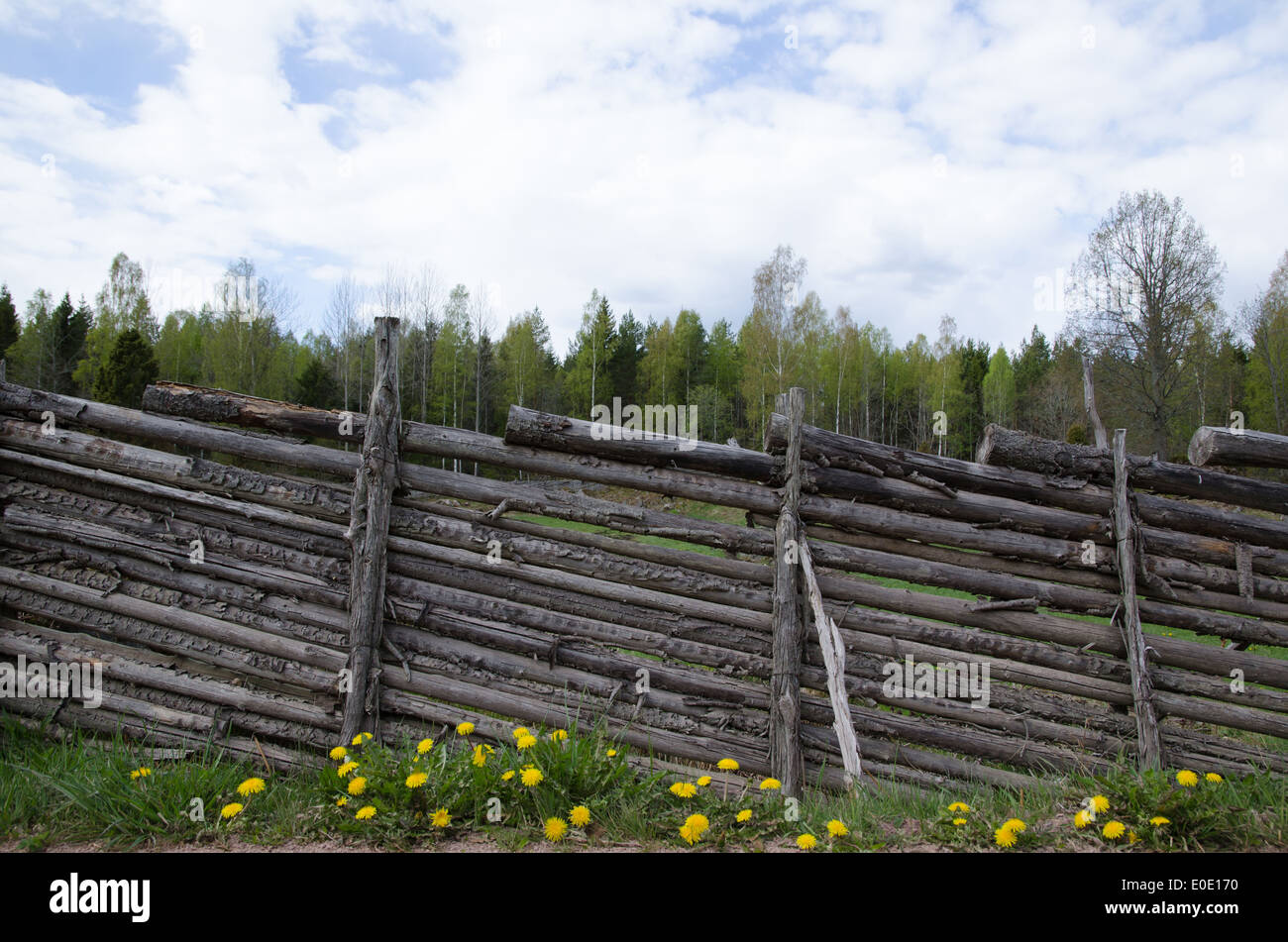 Old swedish traditional wooden fence with dandelions at springtime - Stock Image