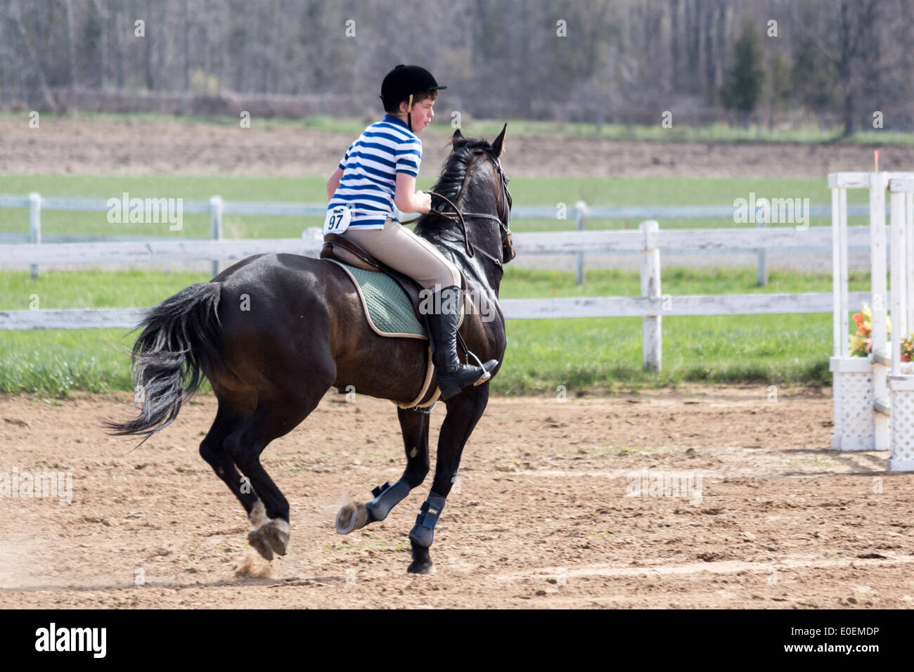 Teenage Boy On Dark Bay Pony Preparing For Going Over A Jump At A Stock Photo Alamy