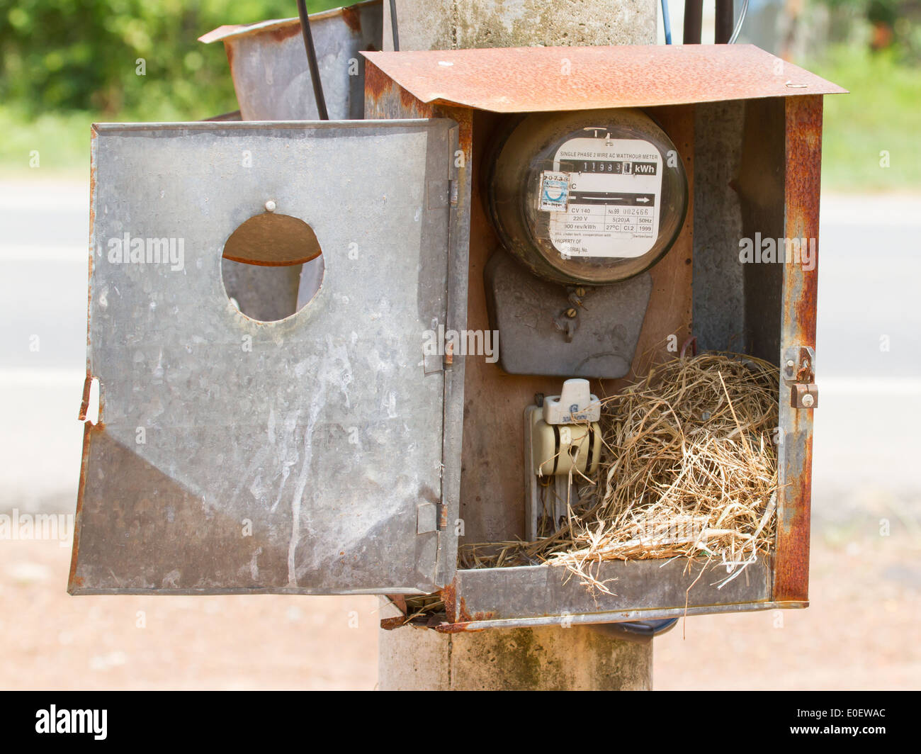 Nest of a sparrow in a cabinet with electrical meter (Vietnam) - Stock Image