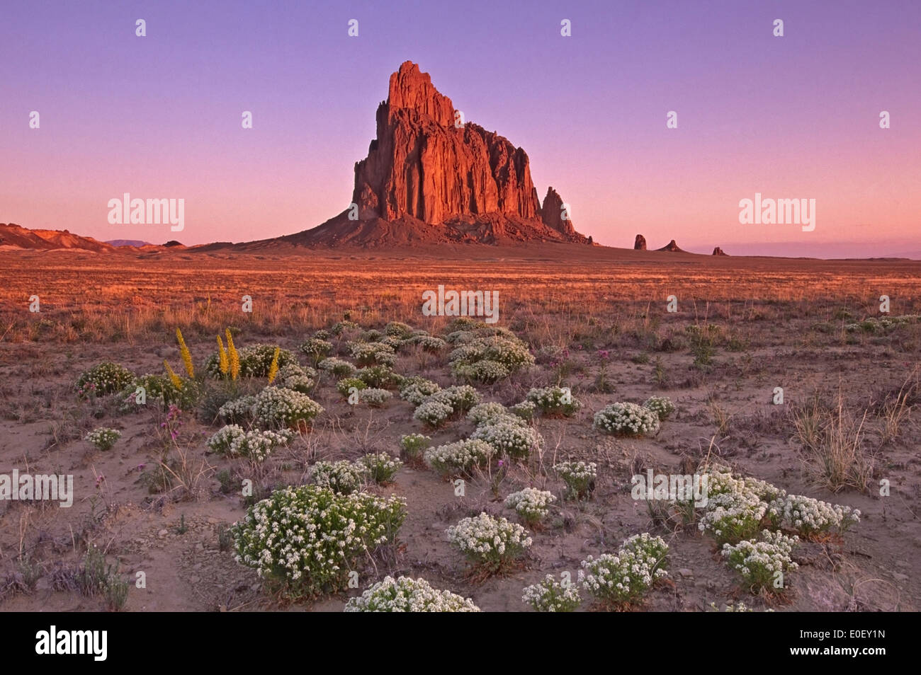 Wildflowers and Shiprock, New Mexico USA - Stock Image
