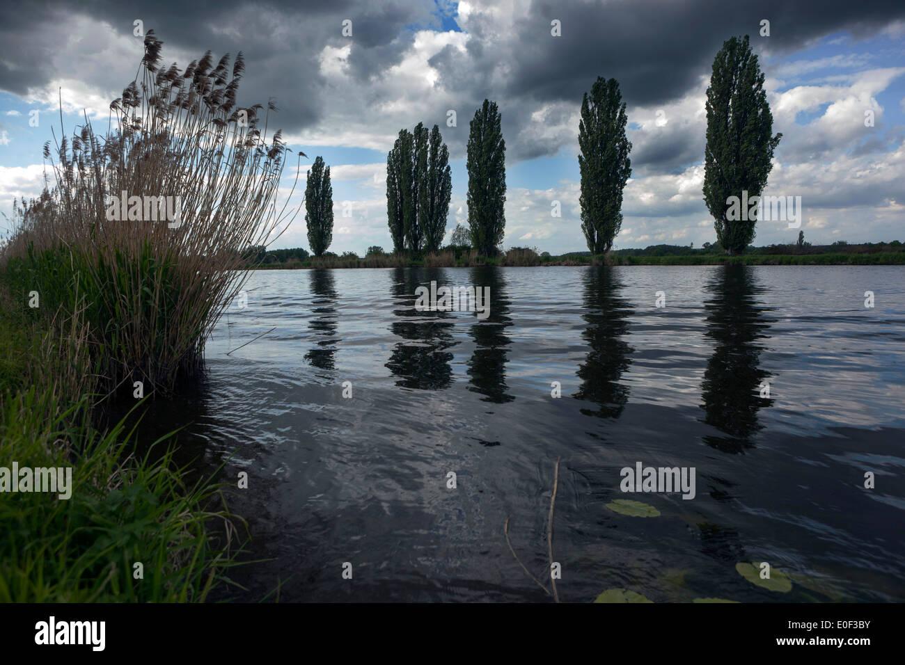 The river Elbe landscape - Stock Image