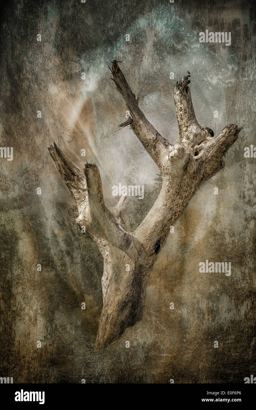 Painterly and grunge effect image of a dead and stripped tree trunk resembling a petrified forest in the dawn light. - Stock Image