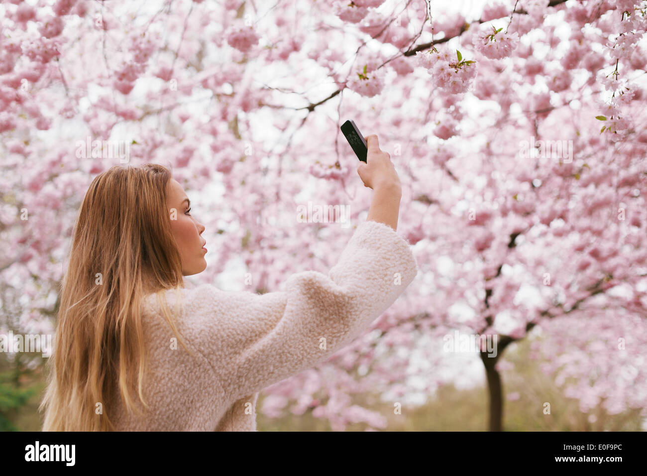 Beautiful young female taking pictures of pink blossom flowers at a spring blossom park. Beautiful caucasian woman photographing - Stock Image