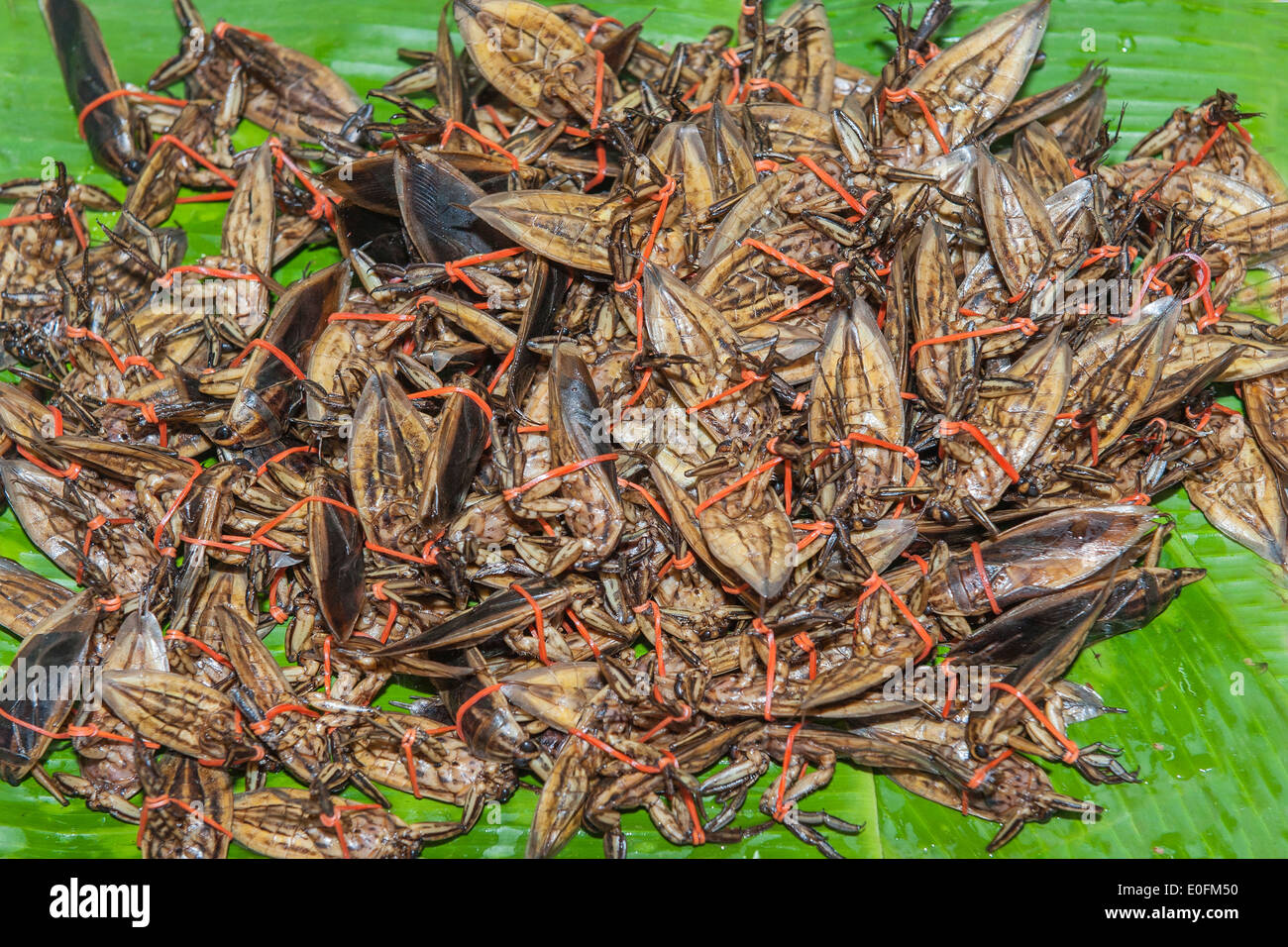 Cooked insects, Market in central Thailand - Stock Image