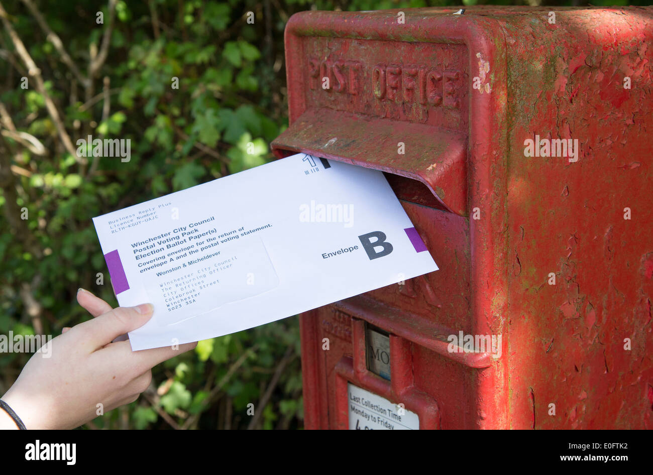 Postal vote envelope being placed into a letter box - Stock Image