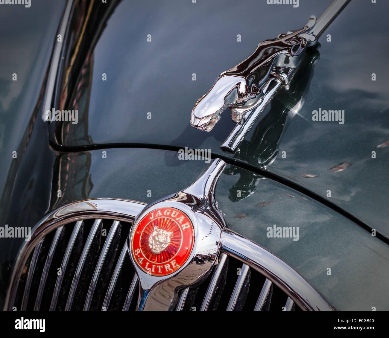 Vintage 3.4 litre Jaguar car detail - badge and chrome hood emblem and grille - Stock Image