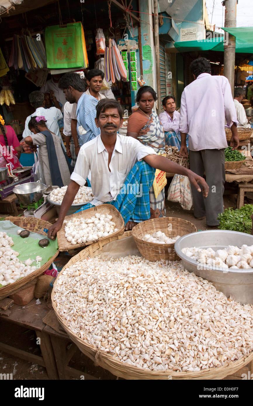 India, Tamil Nadu, Tiruvannamalai, town centre, bazaar, garlic seller in the vegetable market - Stock Image