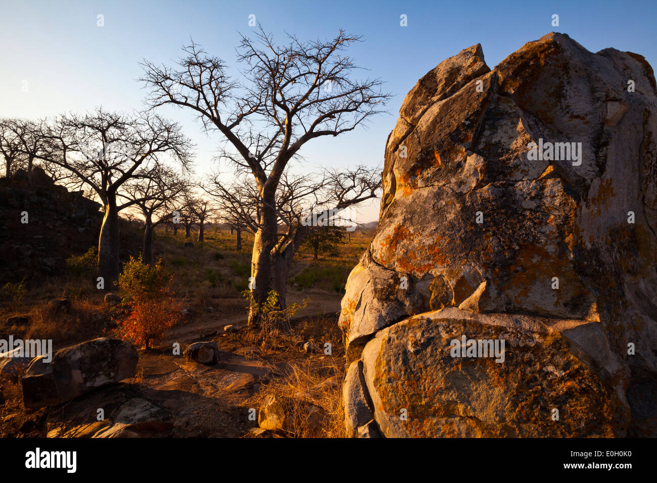Evening scene with a rock and baobab trees, Malawi, Africa - Stock Image