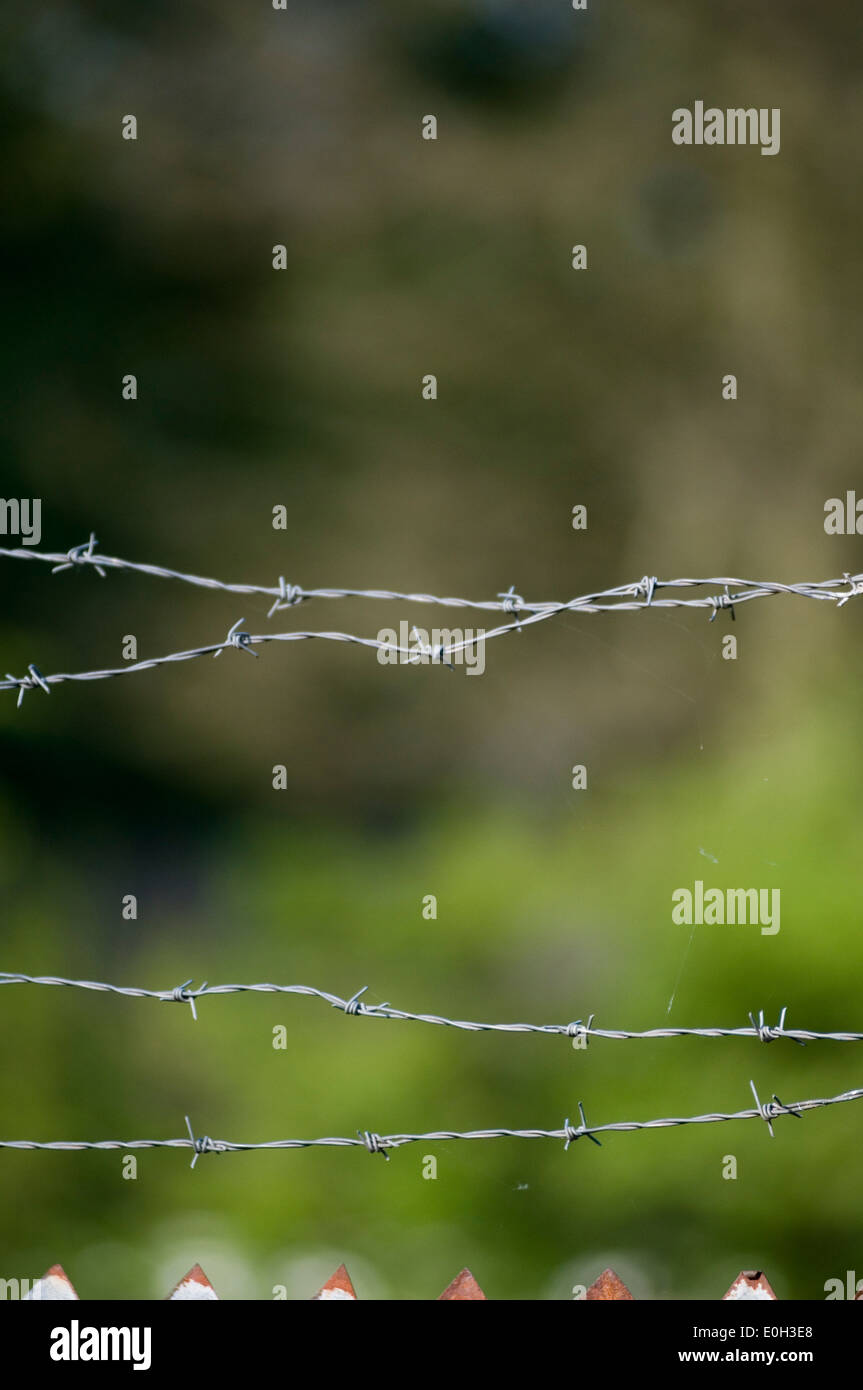barbwire barb barbed wire wire barbwire fence sharp - Stock Image