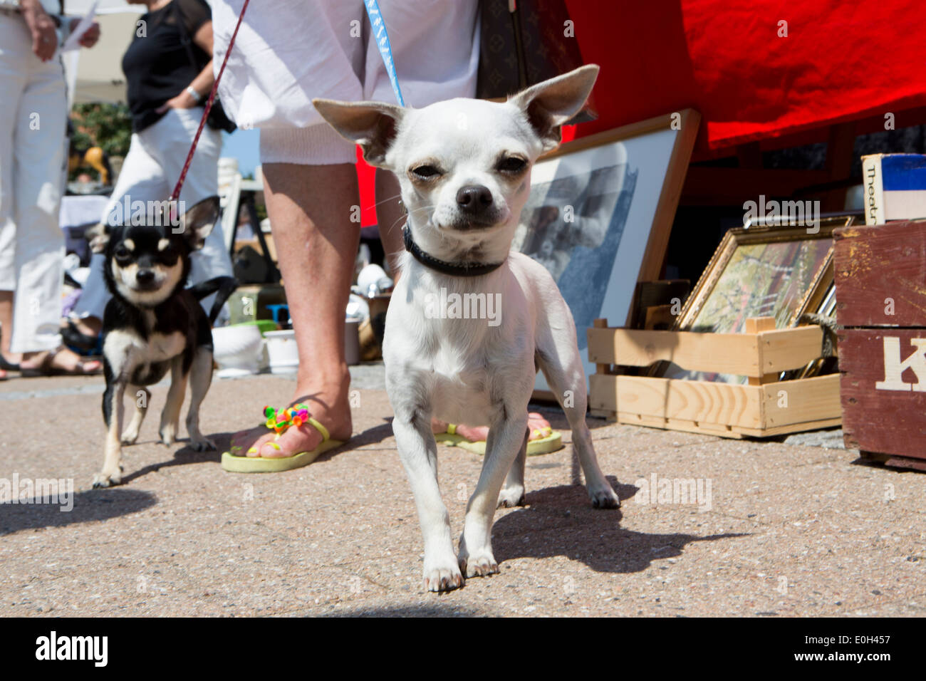 Two small dogs - Stock Image