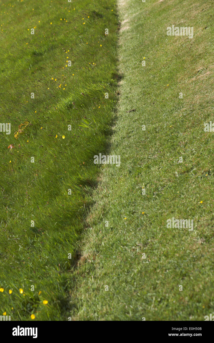 dividing line - right side of area of land has been mown, left side left uncut - Stock Image