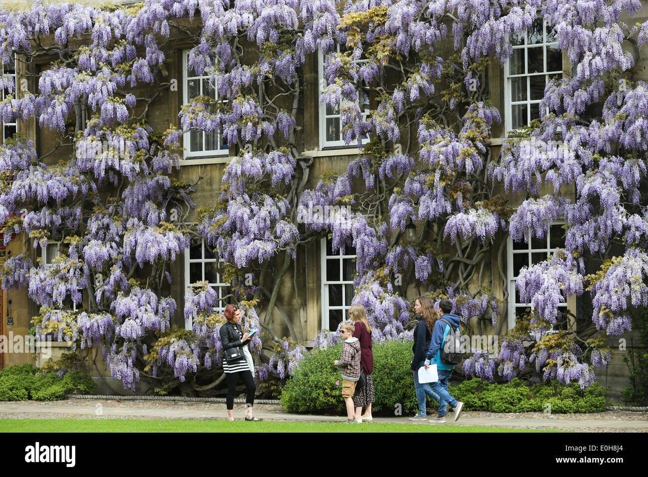 STUDENTS WALKING PAST THE WISTERIA  ON THE MASTER'S LODGE AT CHRIST'S COLLEGE CAMBRIDGE - Stock Image