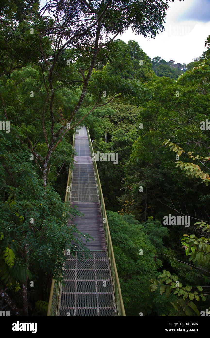 The 90 foot high CAN0PY WALKWAY at the RAINFOREST DISCOVERY CENTER located in the KABILI SEPILOK FOREST - BORNEO - Stock Image