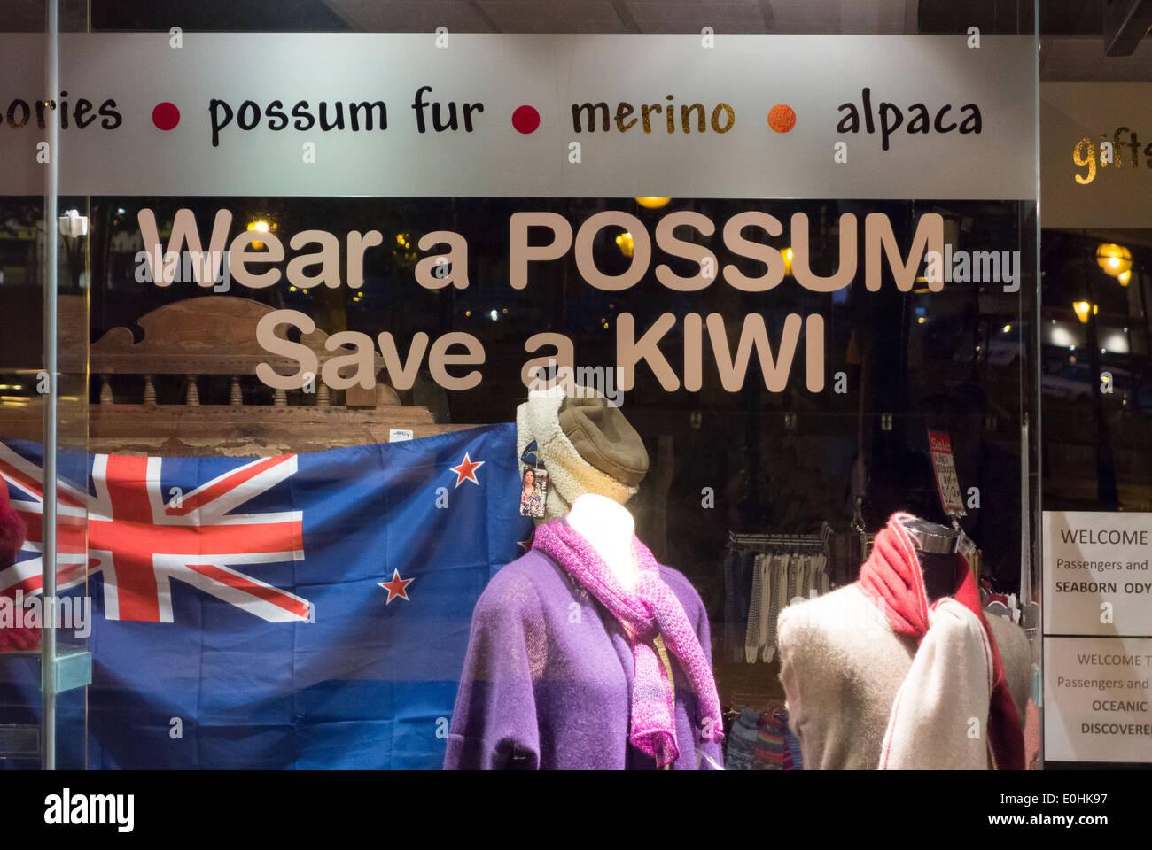 Wear A Possum Save A Kiwi Shop window in Dunedin New Zealand promoting possum-merino wool to combat invasive species pest - Stock Image