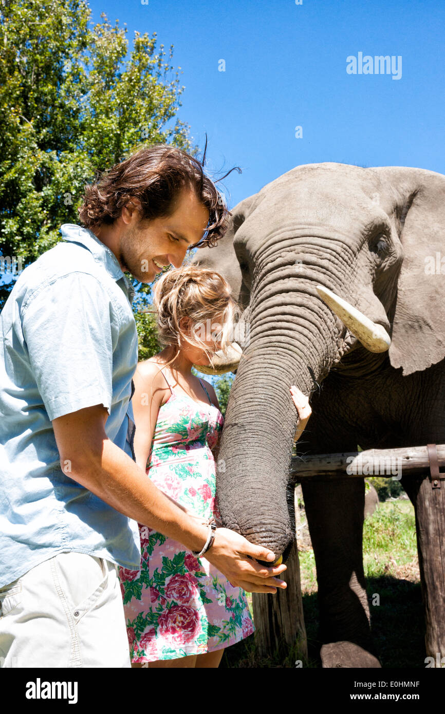Happy couple in early 20's feeding an African elephant, Botlierskop Game Reserve, Mosselbay, South Africa - Stock Image