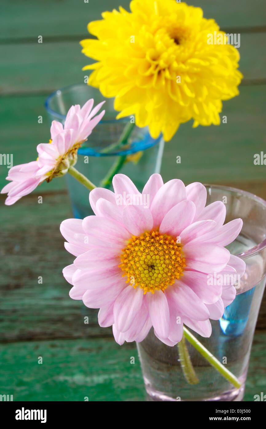 flower in vase - Stock Image