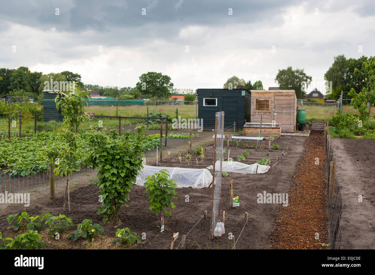 A perfect maintained allotment garden in the Netherlands - Stock Image