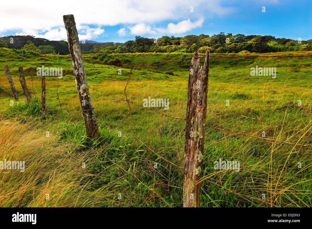 Pasture fence post Maui, Hawaii - Stock Image