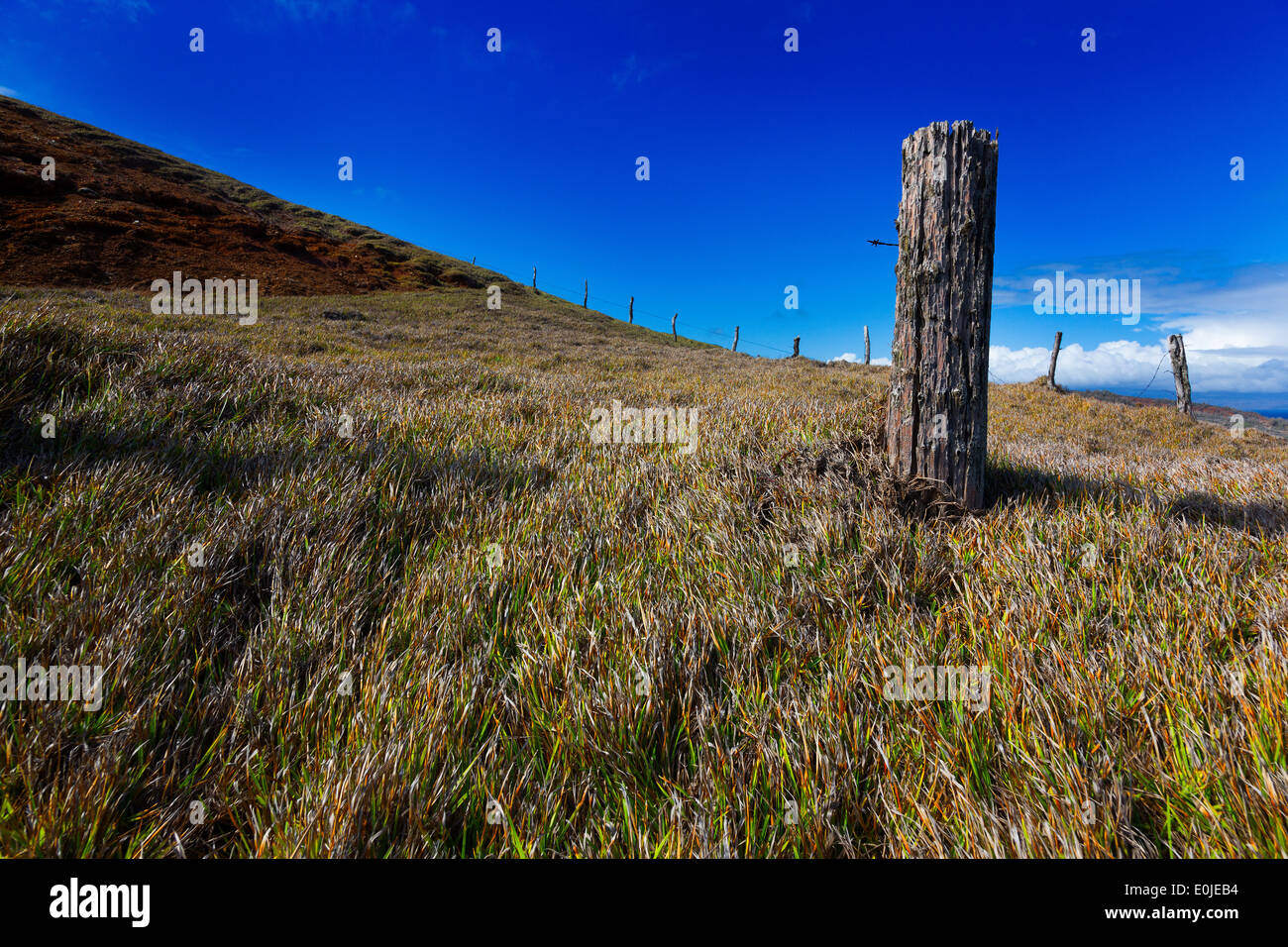 Fence post, broken barb wire pasture land Maui, Hawaii - Stock Image