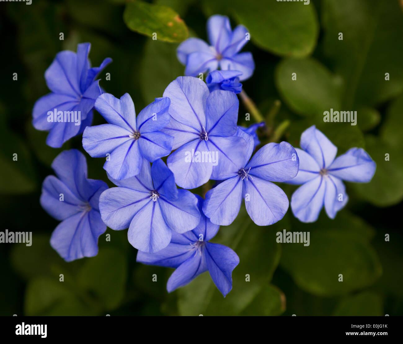 Hawaiian flower stock photos hawaiian flower stock images alamy exotic hawaiian flower found on kauai hawaii stock image izmirmasajfo Images