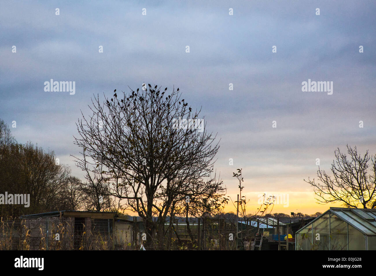 Sunset landscape allotment garden during winter in the Netherlands Stock Photo