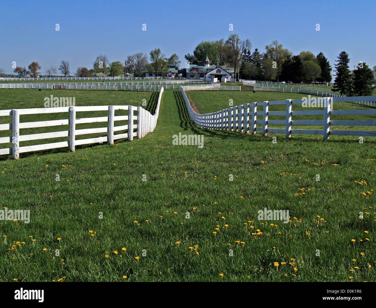 White fencing leads into a Thoroughbred farm,Lexington,Kentucky - Stock Image
