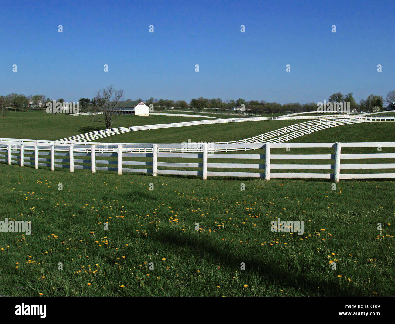 White plank fences on the Bluegrass Country Driving Tour,Lexington,Kentucky - Stock Image