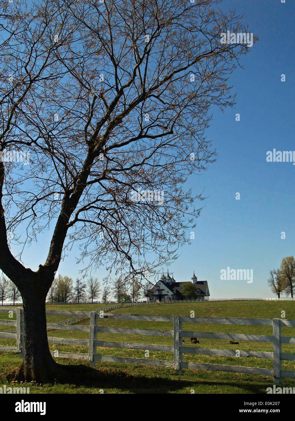 A horse barn and cupolas on the Bluegrass Country Driving Tour,Lexington,Kentucky - Stock Image