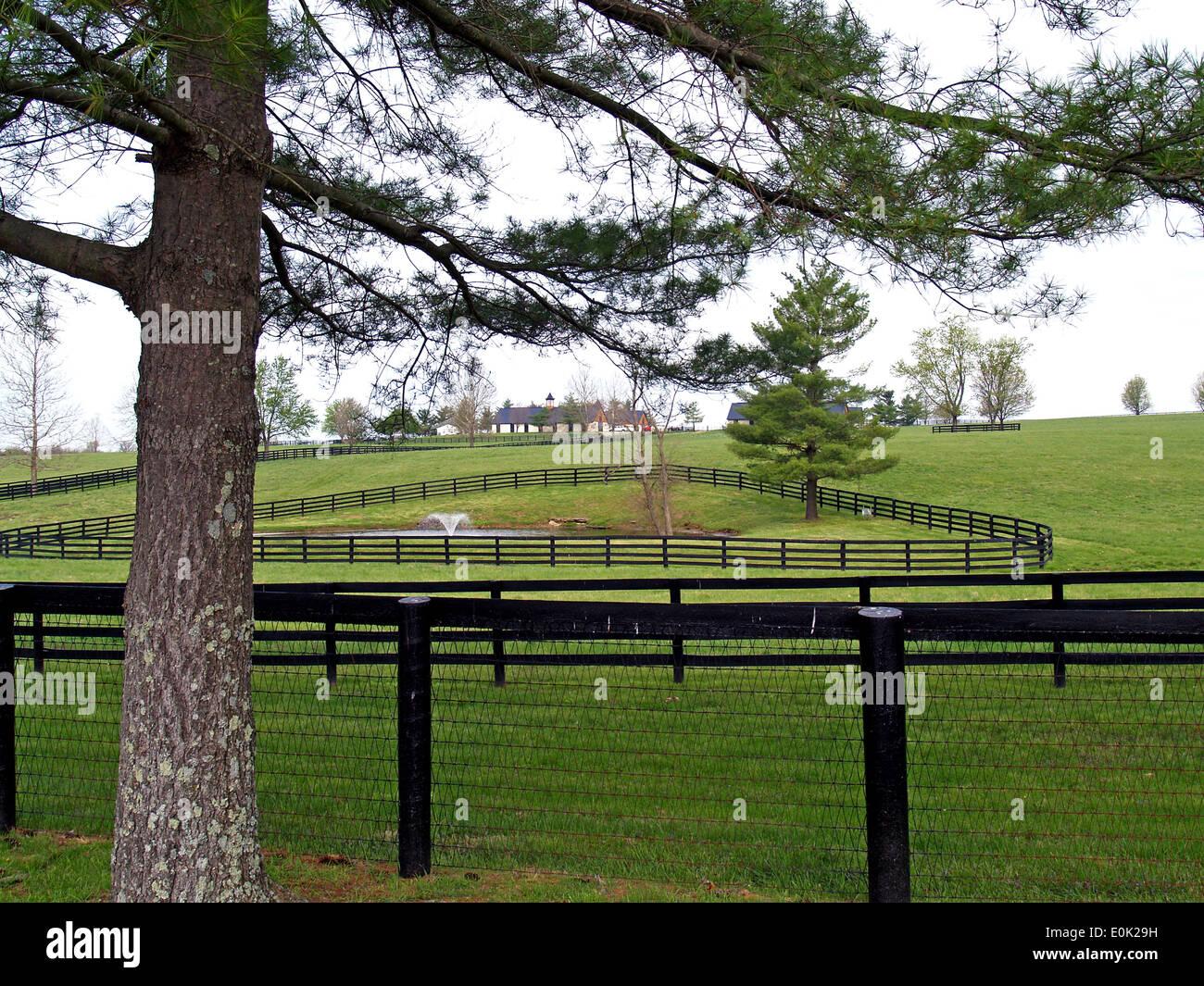 A Thoroughbred farm with black fences outside of Lexington,Kentucky - Stock Image