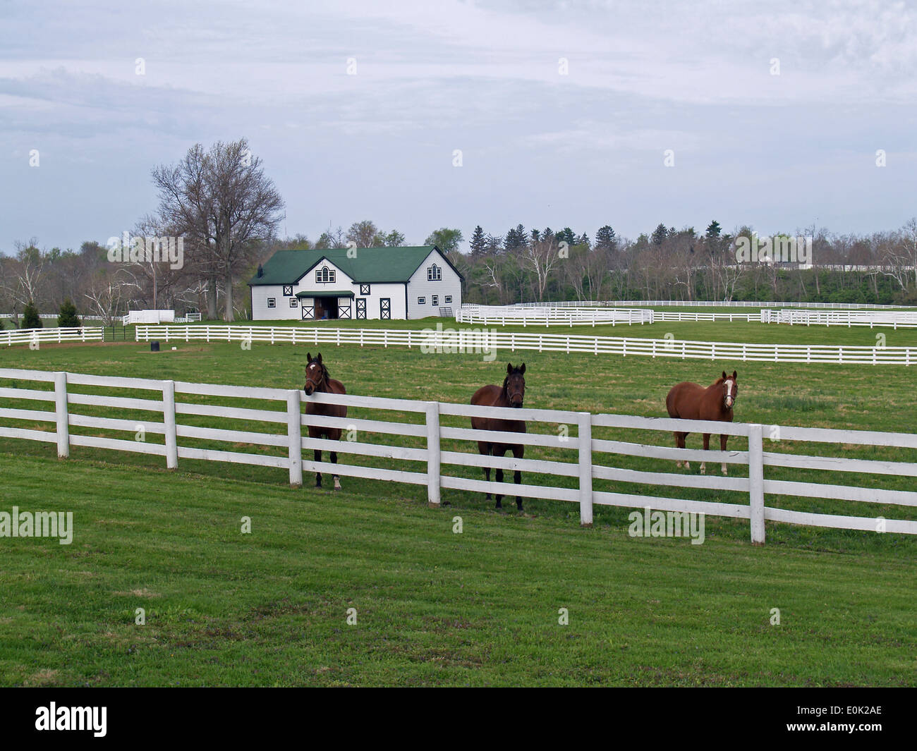 Thoroughbred horses at the fence,Lexington,Kentucky - Stock Image