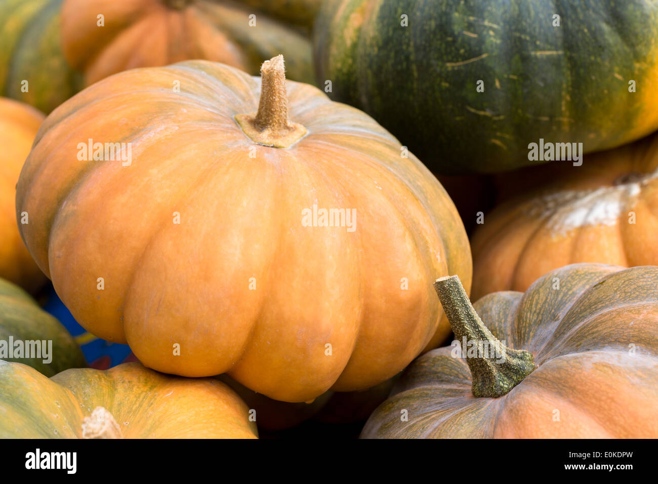 Locally-grown freshly-picked pumpkin and squash vegetable displayed for sale in Pays de La Loire, Loire Valley, Stock Photo