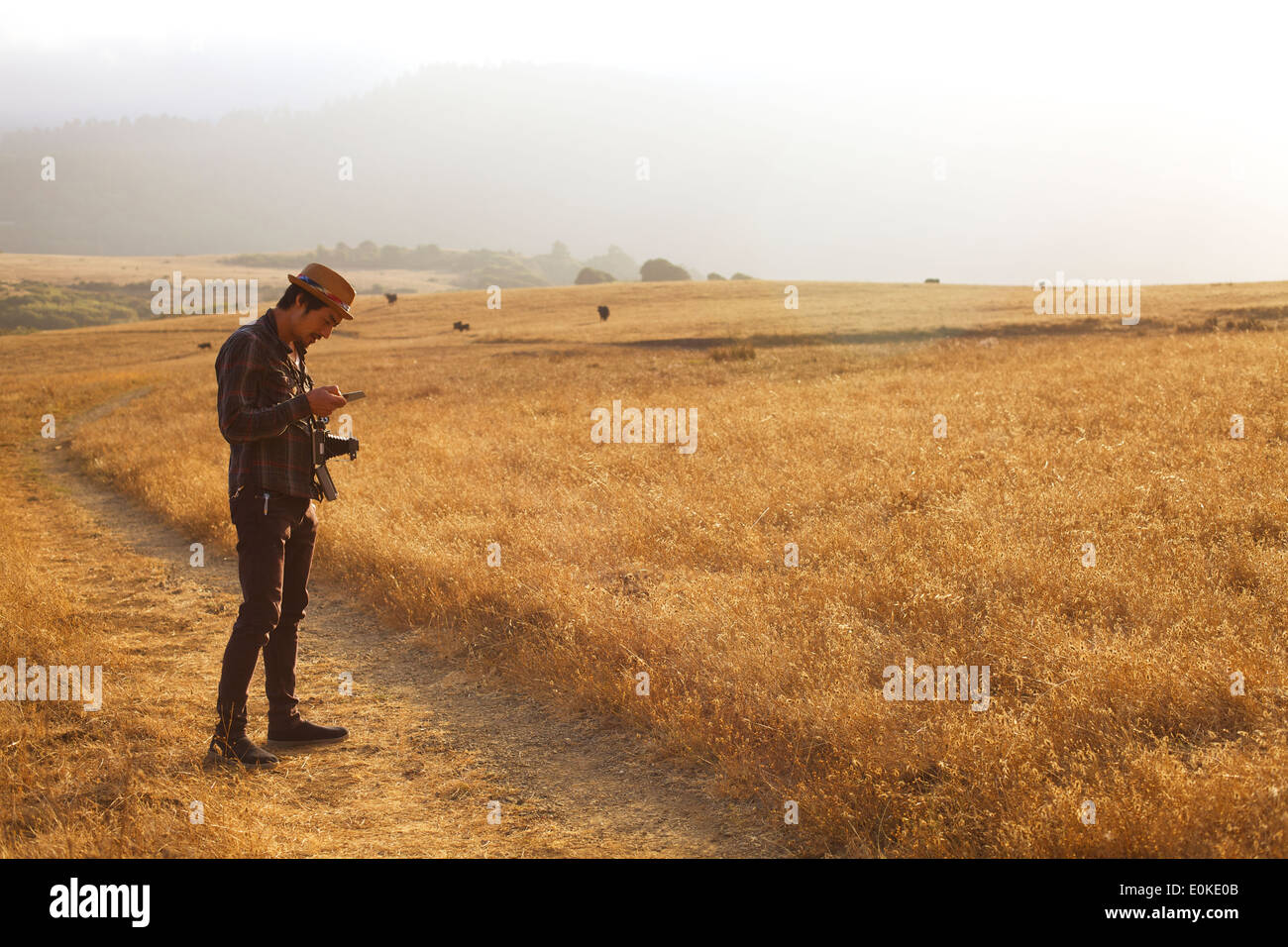 A man stands in a golden colored field and studies a picture from his land camera. - Stock Image