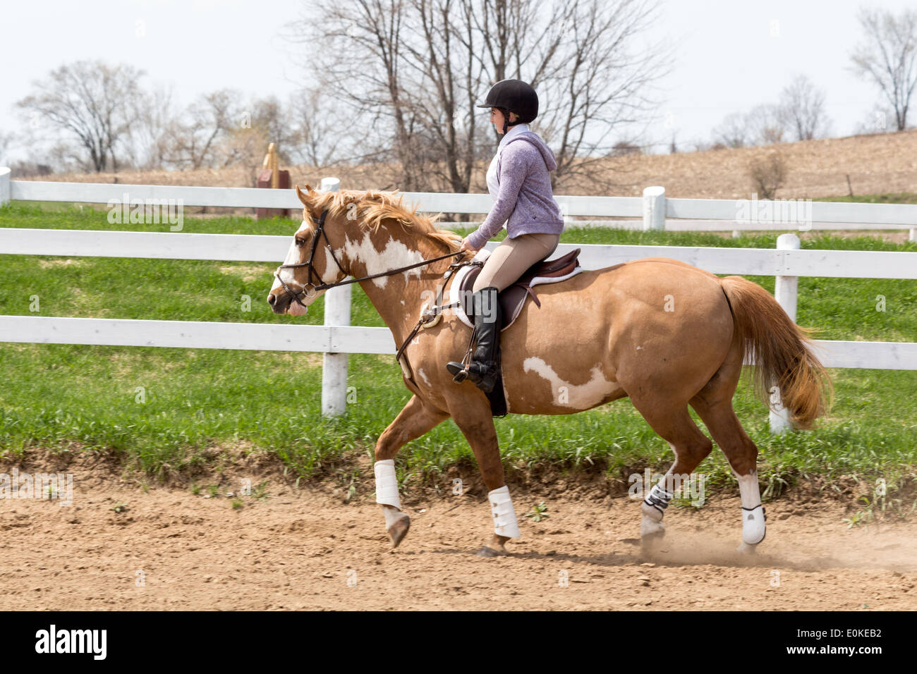 Teenage girl riding Paint horse pony in English riding attire and saddle on a sunny day. - Stock Image
