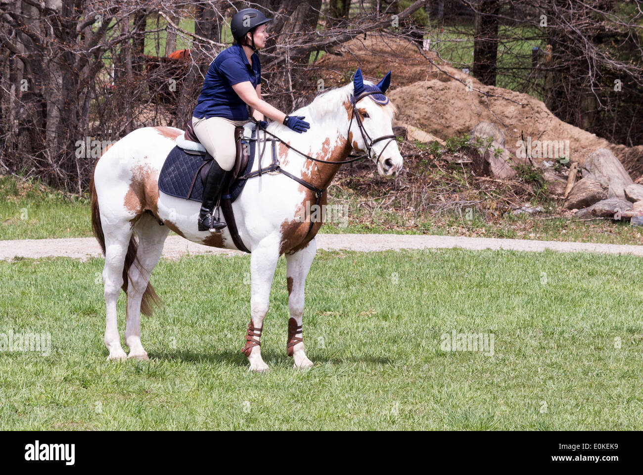 Woman Rider On Paint Horse In English Saddle Petting Her Horse On The Stock Photo Alamy