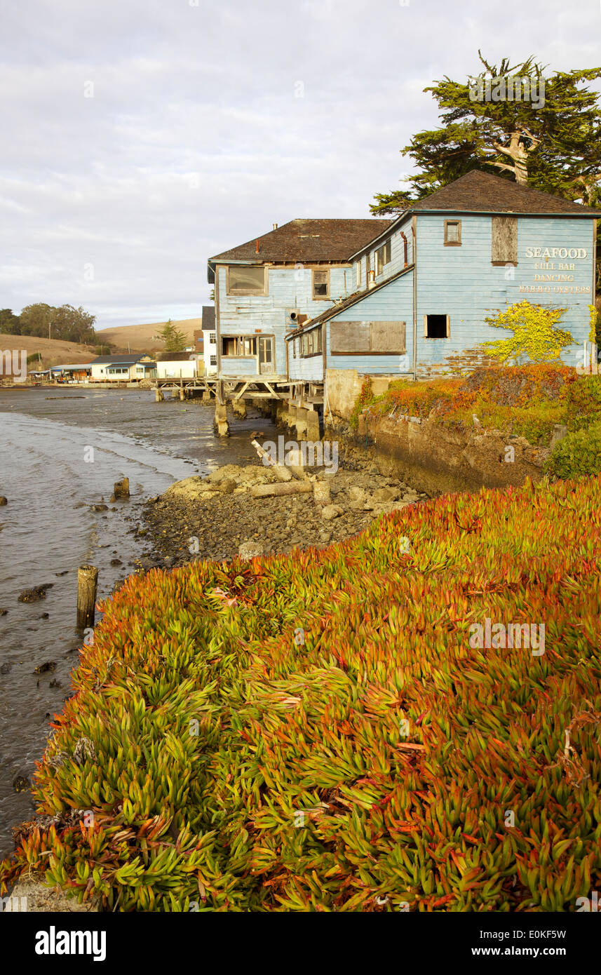 An old wooden building on Tomales Bay, Marshall, California, ice plant in the foreground. - Stock Image