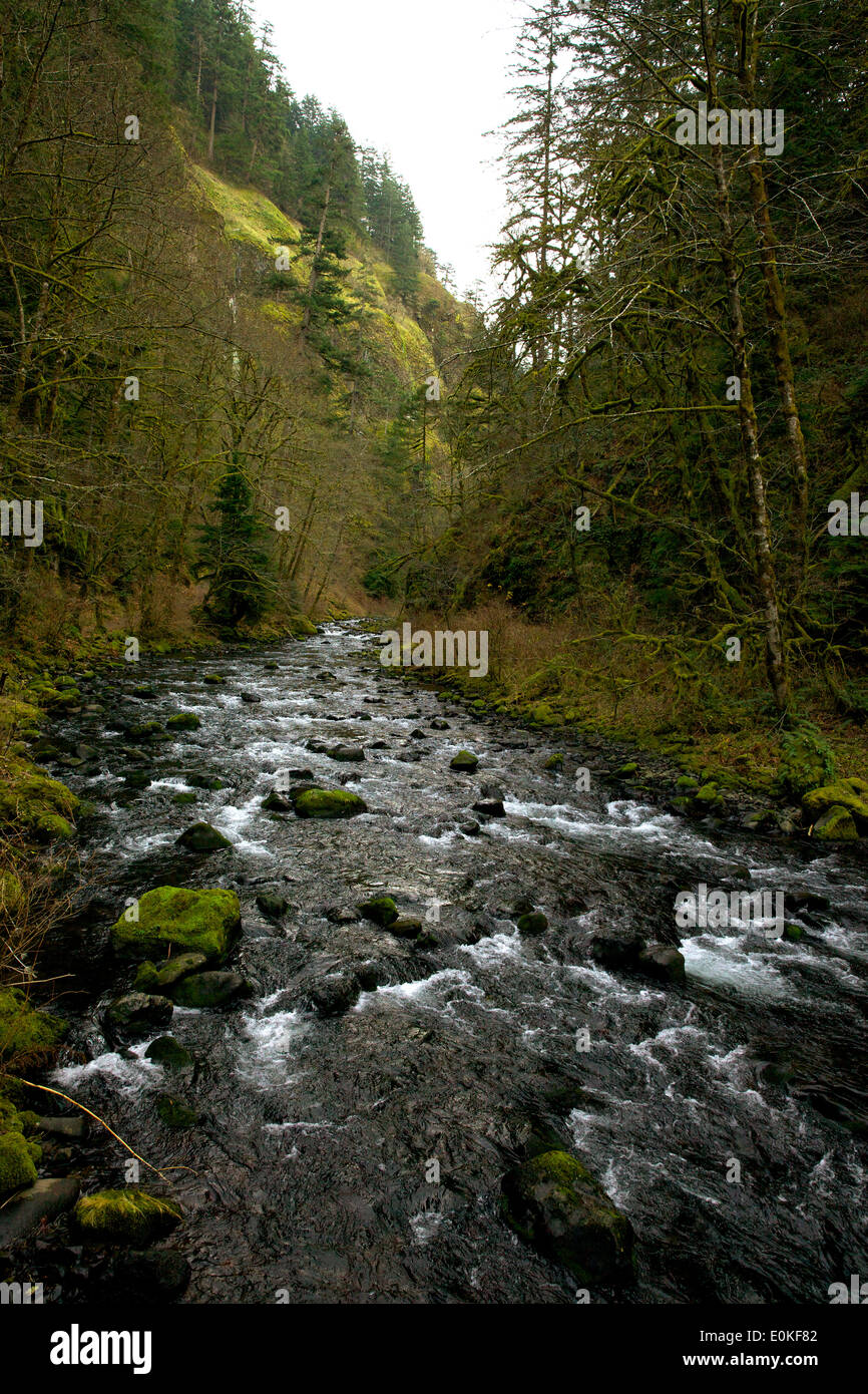 Tanner Creek flows from Wachlella Falls in Multnomah County Oregon. - Stock Image